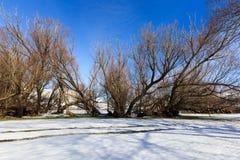Paesaggio della neve di inverno con gli alberi Immagini Stock
