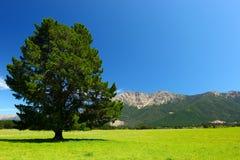 Paesaggio della Nuova Zelanda Immagine Stock Libera da Diritti
