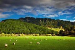 Paesaggio della Nuova Zelanda, isola del nord Fotografie Stock Libere da Diritti