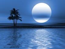 Paesaggio della palma Fotografia Stock Libera da Diritti