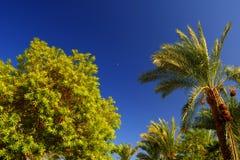 Paesaggio della pianta di estate Fotografia Stock Libera da Diritti
