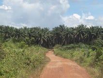 Paesaggio della piantagione dell'olio di palma Immagini Stock