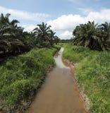 Paesaggio della piantagione dell'olio di palma Fotografia Stock