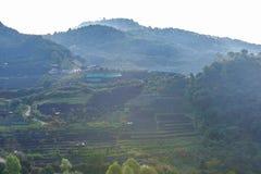 Paesaggio della piantagione di tè 2000 a Doi Ang Khang Fotografie Stock Libere da Diritti