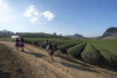 Paesaggio della piantagione di tè il chiaro giorno Azienda agricola del tè con la gente locale che cammina sulla strada, sul ciel Fotografie Stock Libere da Diritti