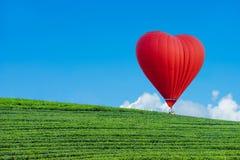Paesaggio della piantagione di tè su cielo blu immagini stock libere da diritti