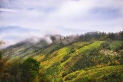 Paesaggio della piantagione di tè sulla montagna in Darjeeling Fotografie Stock