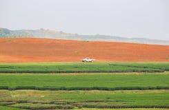 Paesaggio della piantagione di tè verde e di un'area per coltivare tè con l'automobile per i lavoratori Fotografie Stock