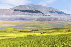 Paesaggio della pianura di Castelluccio in Italia Fotografia Stock
