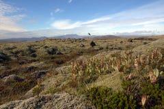 Paesaggio della pianura di Outwash in Islanda Fotografia Stock Libera da Diritti
