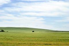 Paesaggio della prateria Fotografia Stock