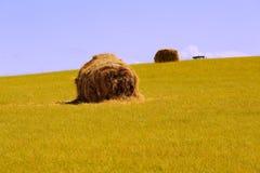 Paesaggio della prateria di Mongolia Interna Hulunbeier Immagine Stock