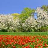 Paesaggio della primavera Immagine Stock