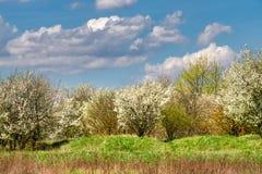 Paesaggio della primavera con i cespugli di fioritura Immagine Stock