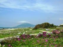 Paesaggio della primavera con i fiori e le montagne porpora rosa lungo la strada di pellegrinaggio di Saint James, Portoghesi di  immagine stock