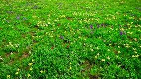 Paesaggio della primavera con i fiori selvaggi sboccianti stock footage