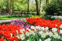 Paesaggio della primavera con i fiori variopinti Fotografie Stock