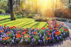 Paesaggio della primavera con i fiori variopinti Fotografia Stock