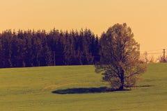 Paesaggio della primavera con il retro tono di colore dell'albero Immagini Stock