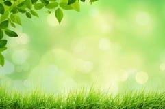 Paesaggio della primavera con le luci del bokeh e dell'erba Immagine Stock