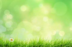 Paesaggio della primavera con le luci del bokeh e dell'erba Fotografia Stock
