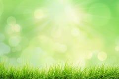 Paesaggio della primavera con le luci del bokeh e dell'erba Fotografia Stock Libera da Diritti