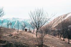 Paesaggio della primavera con neve ed i pini di fusione immagine stock libera da diritti