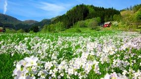 Paesaggio della primavera con un campo dei crescioni dei prati rosa selvaggi e una Camera rossa in una valle verde immagini stock