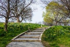 Paesaggio della primavera del parco di patterson con i fiori a Baltimora marzo Immagine Stock Libera da Diritti