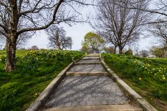 Paesaggio della primavera del parco di patterson con i fiori a Baltimora marzo Fotografia Stock