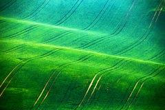 Paesaggio della primavera di rotolamento di verde di Moravian Giacimenti della primavera immagini stock libere da diritti