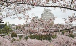 Paesaggio della primavera di un castello giapponese alla luce di primo mattino Immagini Stock