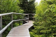 Paesaggio della primavera - Forest Hiking nero sul percorso di Lothar nella foresta nera, Germania immagine stock libera da diritti