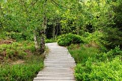 Paesaggio della primavera - Forest Hiking nero sul percorso di Lothar nella foresta nera, Germania immagini stock libere da diritti