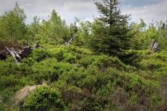 Paesaggio della primavera - Forest Hiking nero sul percorso di Lothar nella foresta nera, Germania fotografia stock libera da diritti