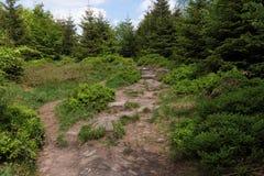 Paesaggio della primavera - Forest Hiking nero sul percorso di Lothar nella foresta nera, Germania fotografie stock