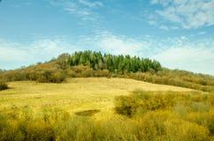 Paesaggio della primavera, foresta di conifere su un fondo verde del prato inglese Fotografia Stock