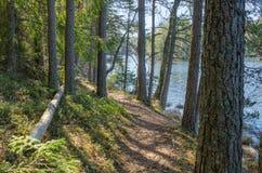 Paesaggio della primavera a legno Fotografia Stock