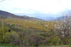 Paesaggio della primavera in Romania Fotografia Stock