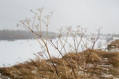 Paesaggio della primavera in Siberia sul fiume immagini stock libere da diritti