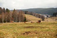 Paesaggio della primavera in Sumava Fotografie Stock