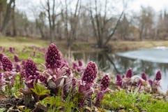 Paesaggio della primavera vicino allo stagno Fotografia Stock