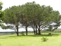 Paesaggio della provincia del Capo Orientale Immagine Stock
