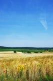 Paesaggio della regione di ardenas del champanhe- Fotografie Stock
