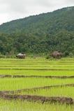 Paesaggio della risaia di riso Immagini Stock Libere da Diritti