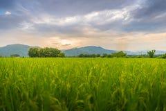 Paesaggio della risaia e montagna sotto il cielo blu nel giorno del sole Immagini Stock