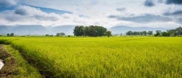 Paesaggio della risaia e montagna sotto il cielo blu nel giorno del sole Immagini Stock Libere da Diritti