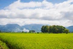 Paesaggio della risaia e montagna sotto il cielo blu nel giorno del sole Fotografia Stock