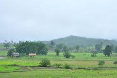 Paesaggio della risaia nel giorno piovoso, scena di agricoltura Fotografie Stock