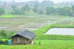 Paesaggio della risaia nel giorno piovoso, scena di agricoltura Fotografia Stock Libera da Diritti